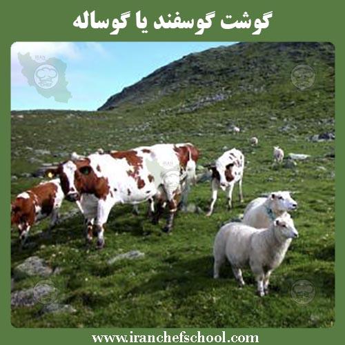 گوشت گوسفند یا گوساله