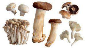 با قارچ های خوراکی آشنا شوید